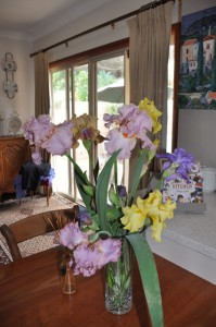 My beautiful fancy irises brighten my kitchen